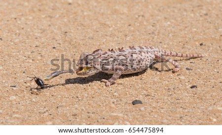 Namib Desert near Swakopmund in Namibia Stock photo © michaklootwijk