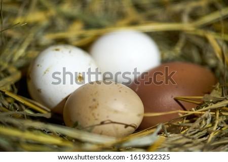 Paaseieren witte bruin eieren ei kip Stockfoto © timurock
