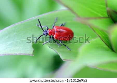 насекомое питьевой зеленый весны Сток-фото © compuinfoto
