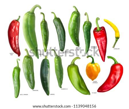 Numex espanola improved pepper, paths Stock photo © maxsol7