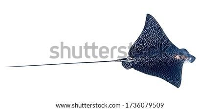 ilustração · natureza · oceano · natação - foto stock © colematt