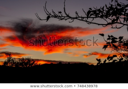 Eerie Silhouette Forest In Orange Night Sky Stock photo © swatchandsoda