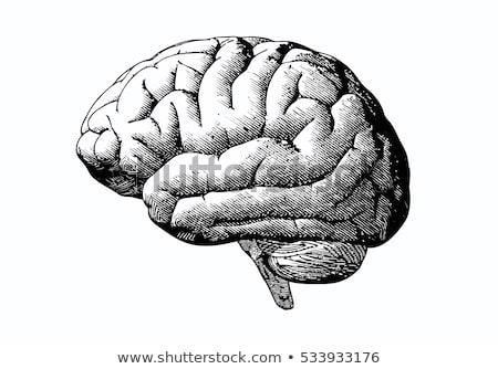 öreg stílus fej agy illusztráció vonal Stock fotó © 3mc
