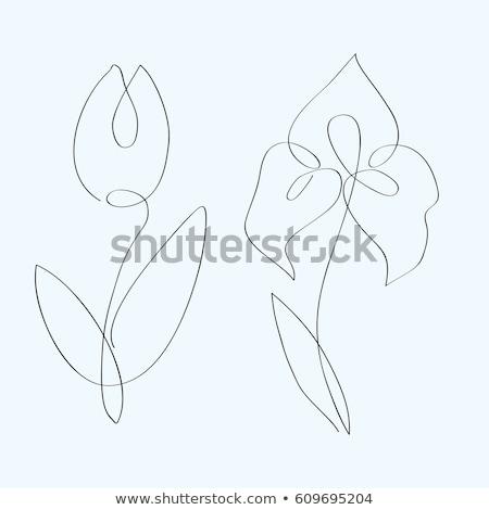 Fiori tulipani Iris isolato bianco fiore Foto d'archivio © RuslanOmega