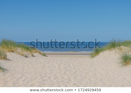 Sand dunes along the coast in Holland stock photo © duoduo