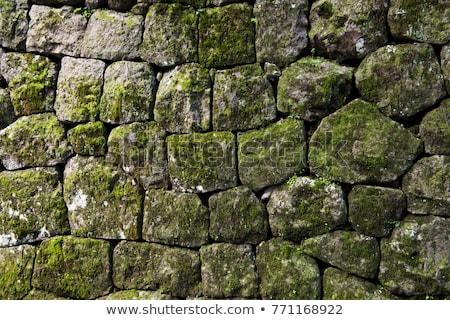 Stone and moss stock photo © MichaelVorobiev