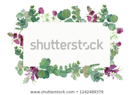 Green fresh clover border stock photo © Anna_Om