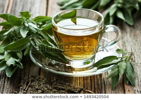 Sage tea Stock photo © joker