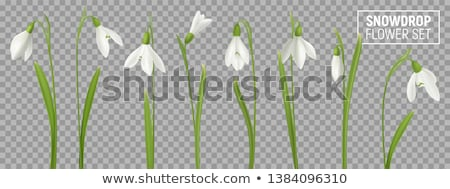 monte · flores · com · sombra · lugar · primavera · natureza - foto stock © pakhnyushchyy