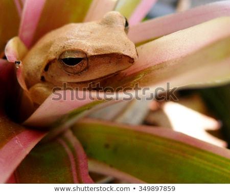 つる 孔雀 カエル ストックフォト © macropixel