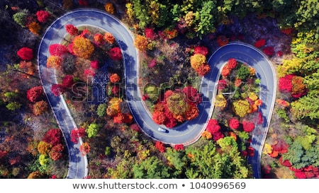 Autumn maple road. stock photo © Pietus