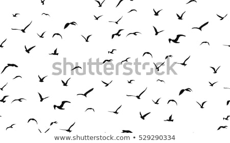 gaivotas · praia · voador · mediterrânico · mar · pôr · do · sol - foto stock © witthaya