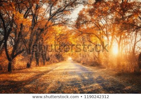 cênico · estrada · cair · rural · Pensilvânia · céu - foto stock © jaymudaliar