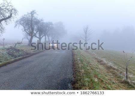 Driving in fog Stock photo © benkrut