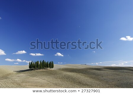 Typical Tuscan Landscape with tree lines and farmhouses, Italy Stock photo © Bertl123