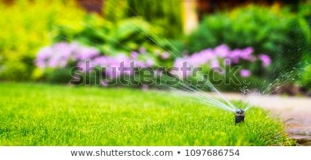 césped · aspersor · hierba · hierba · verde - foto stock © timbrk