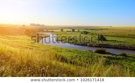 Stock photo: The river in the woods on a sunny day