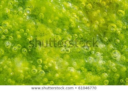 wodorost · pęcherzyki · makro · wiele · mały · niski - zdjęcia stock © smithore