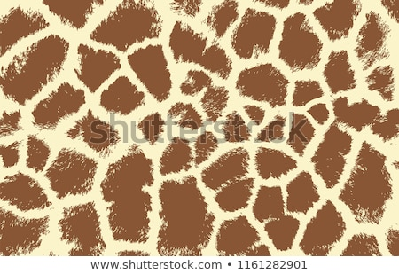 zsiráf · bőr · textúra · eredeti · bőr · fény - stock fotó © arrxxx