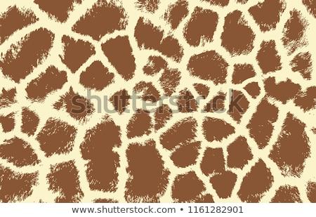 Foto stock: Padrão · girafa · pele · pele · típico · textura