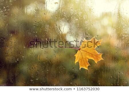 ぬれた ウィンドウ 自然 ガラス 背景 ストックフォト © Alegria111