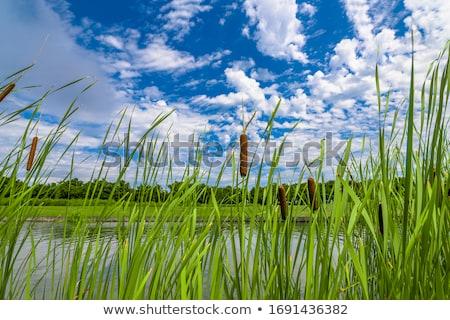 yeşil · bitkiler · mavi · gökyüzü · gökyüzü · arka · plan · yaz - stok fotoğraf © compuinfoto