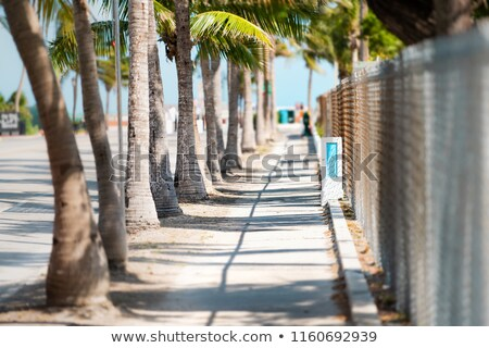 Palm Tree Canopy Stock photo © silkenphotography