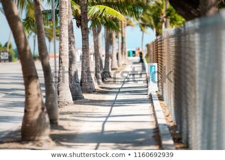 Palm Tree Canopy Stock photo © silkenphotography