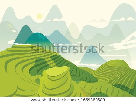 Terraço campo plantação jovem arroz aldeia Foto stock © smithore