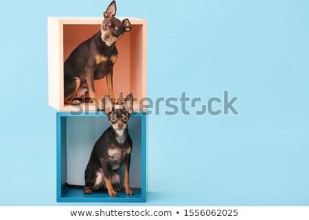 собака игрушку черный животного графических щенков Сток-фото © Ansy