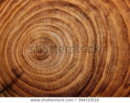 Havlama ağaç duvar doğa arka plan zaman Stok fotoğraf © meinzahn