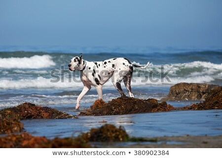 Stockfoto: Groot · hond · lopen · water · puppy · strand