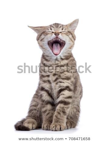 Veterinário abertura boca gato mulher mãos Foto stock © ivonnewierink