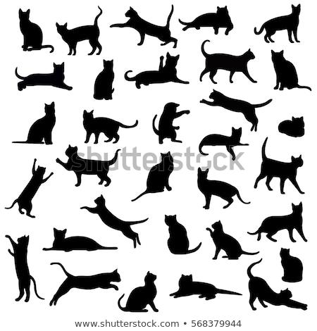 Kat silhouet illustratie geïsoleerd witte dier Stockfoto © Istanbul2009
