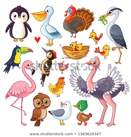 conjunto · diferente · aves · criança · arte · azul - foto stock © robuart