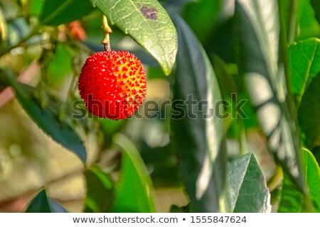kicsi · piros · zöld · alma · közelkép · almafa - stock fotó © digoarpi