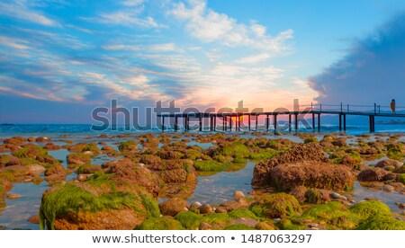Fából készült dokk fedett moha higgadt tó Stock fotó © Mps197