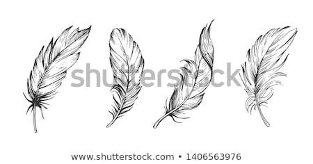Plumes blanche vecteur eps 10 stylo Photo stock © leonardo