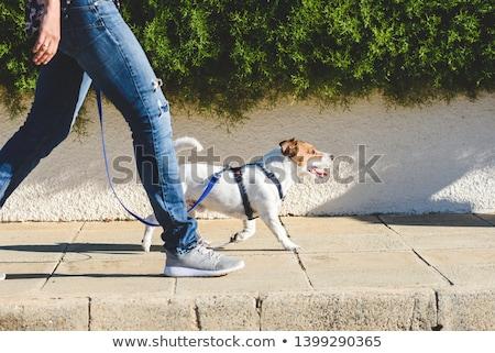 Andar little girl cão outono parque menina Foto stock © nizhava1956