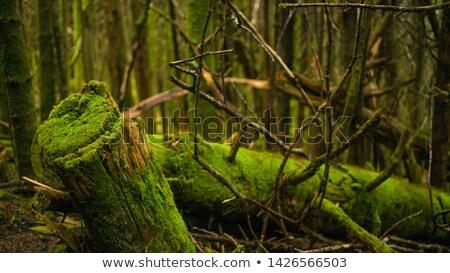 Silvicultura mata trabalhando floresta árvores caminhão Foto stock © ivonnewierink
