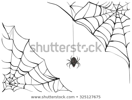 Spiderweb. Big black spider web. Black scary spider of web. Poison spider Stock photo © orensila