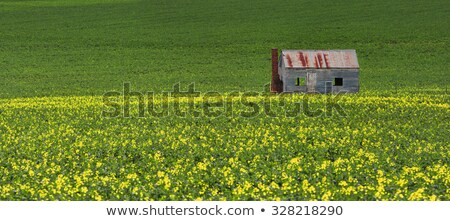 Estanho campos verde ouro rústico ferro Foto stock © lovleah