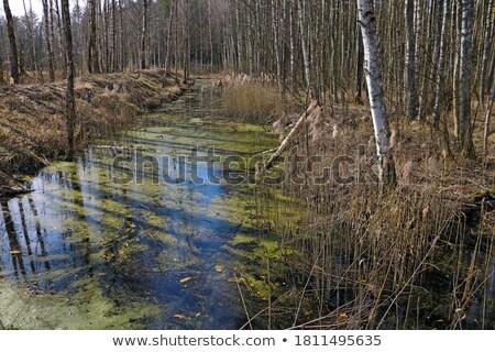 kicsi · mocsár · perem · tavasz · zöld · legelő - stock fotó © ironstealth