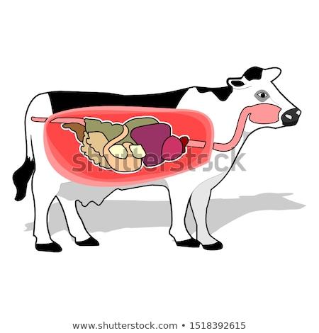 interno · intestinos · 3D · prestados · anatômico - foto stock © aliencat