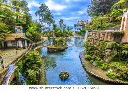 monte palace tropical garden stock photo © brozova