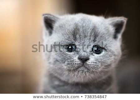A crying cat Stock photo © bluering