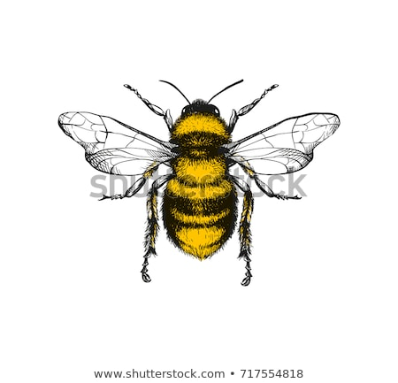 Stock photo: bee with honey
