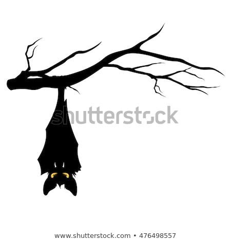 halloween bats hanging vector stock photo © beaubelle