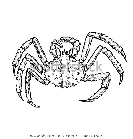 Roi crabe marines alimentaire illustration Photo stock © ConceptCafe