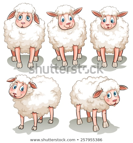 Five white sheeps Stock photo © bluering